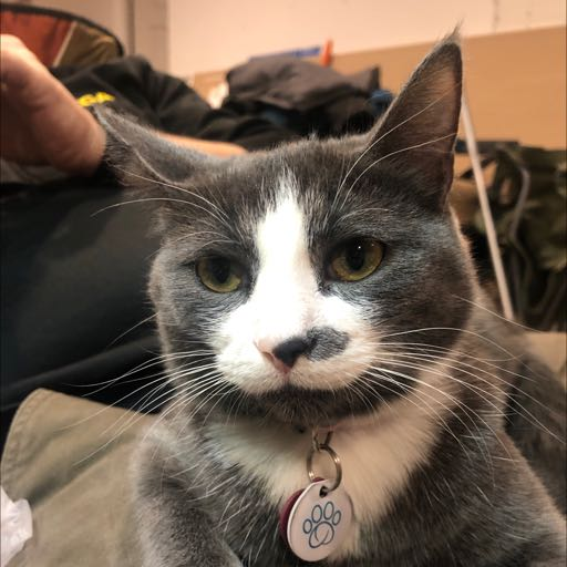 Image of Mochi: lost collar, not cat