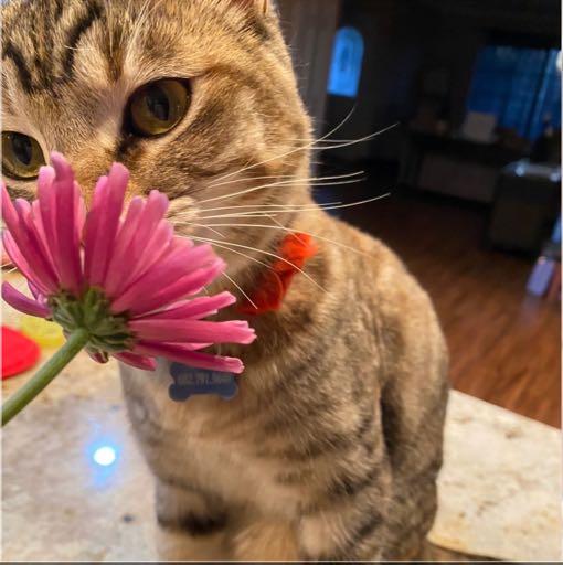 Image of Boo boo kitty