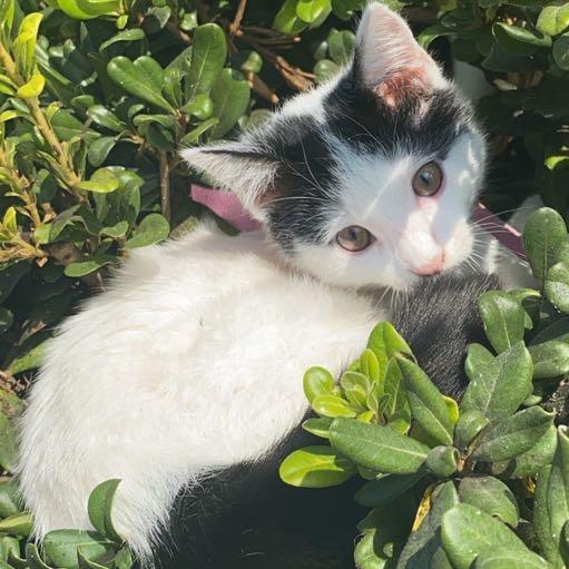 Image of Lilo
