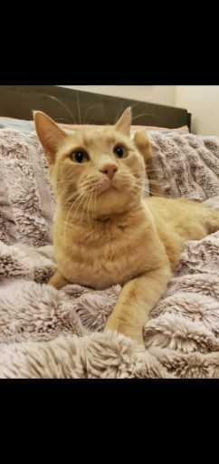Image of Meow Meow