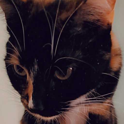 Image of Miss Tiki Masala