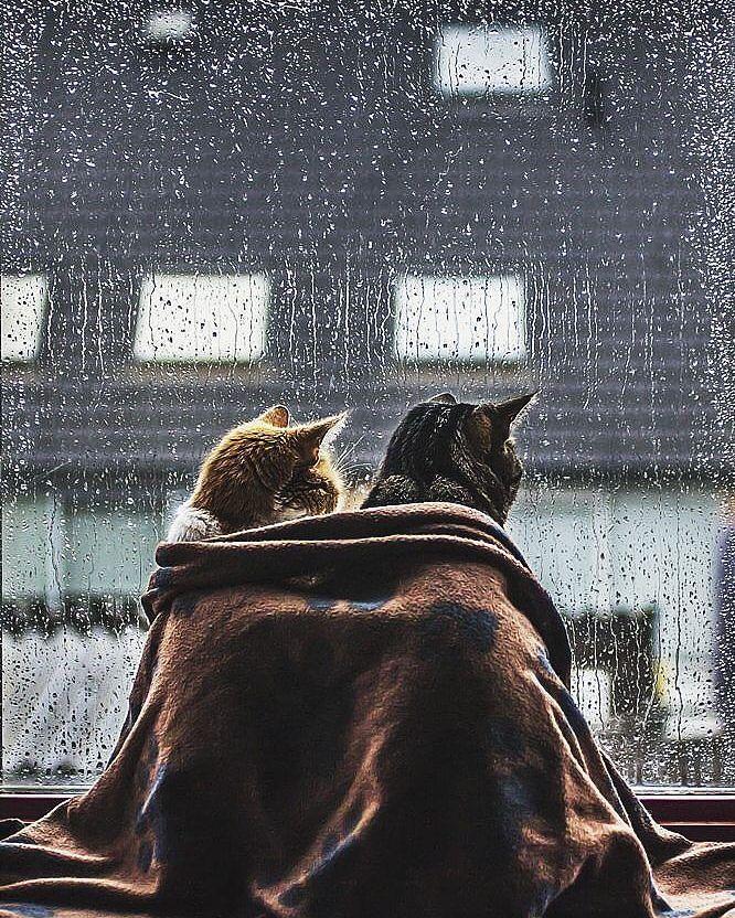 Hôm nay mưa đấy, đi đâu cẩn thận nhé