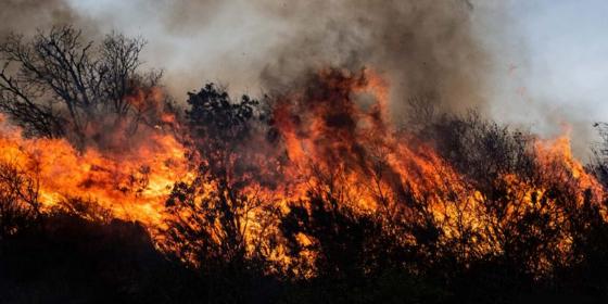 Picture principal - Más del 95% de los incendios forestales son intencionales, aún así no hay responsables
