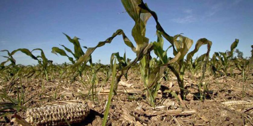 Imagen de la nota '¿Qué tienen que ver el cambio climático y la producción de alimentos?'
