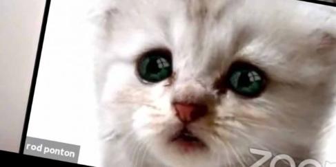 video-viral-abogado-sufrio-mala-pasada-filtro-zoom-no-soy-gato