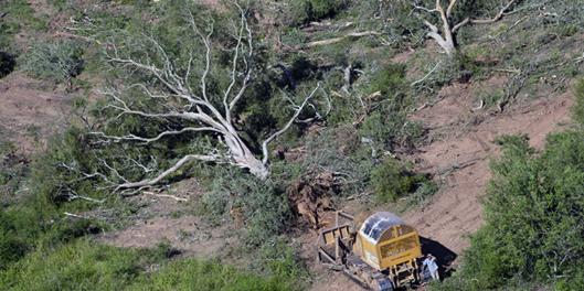 Picture principal - Deforestación: ¿Por qué es importante una ley de bosques nativos en Argentina?