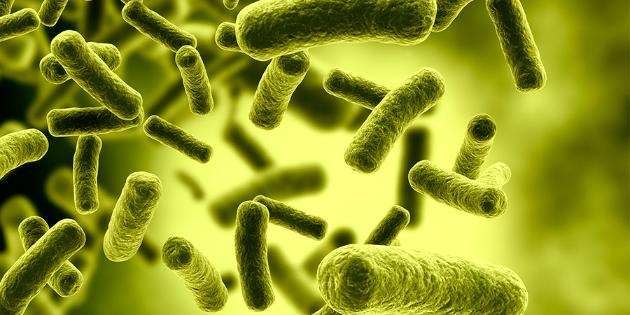 Picture principal - Bacterias para prevenir COVID
