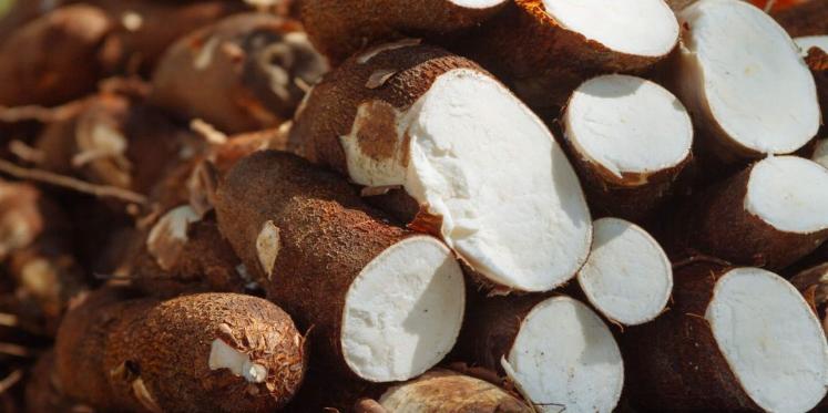 Imagen de la nota '#MorfiNativa Beneficios del consumo de mandioca con receta dulce y salada'