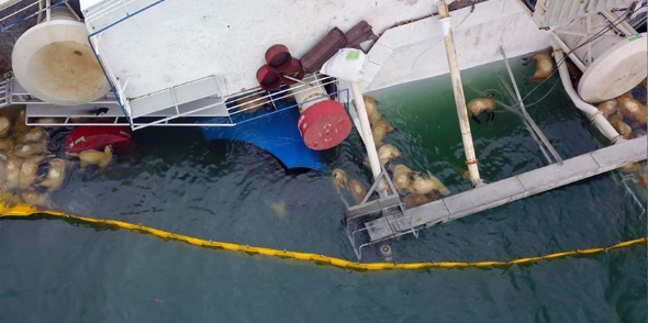 exigen-rumania-respuestas-barco-que-volco-y-mato-14000-ovejas