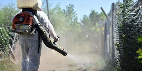 Imagen de la nota 'Dengue: en Misiones se registraron los primeros casos y extreman medidas de prevención'