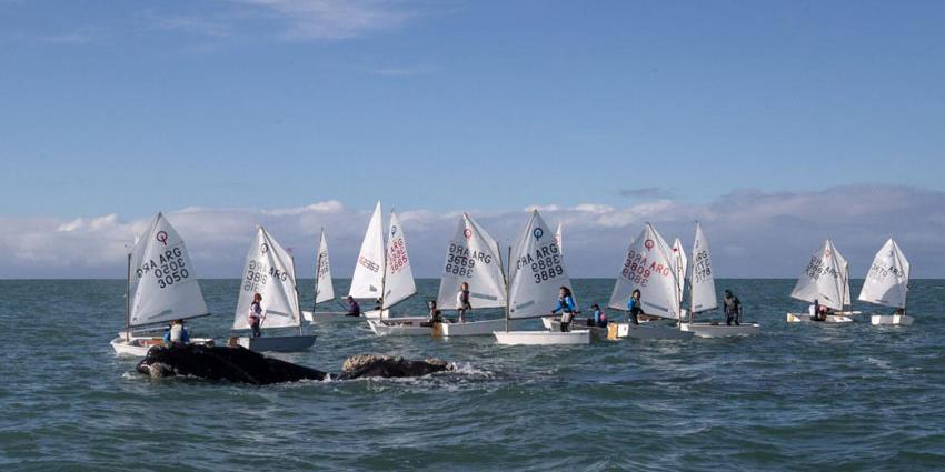 deportistas-y-ballenas-compartieron-regreso-del-deporte