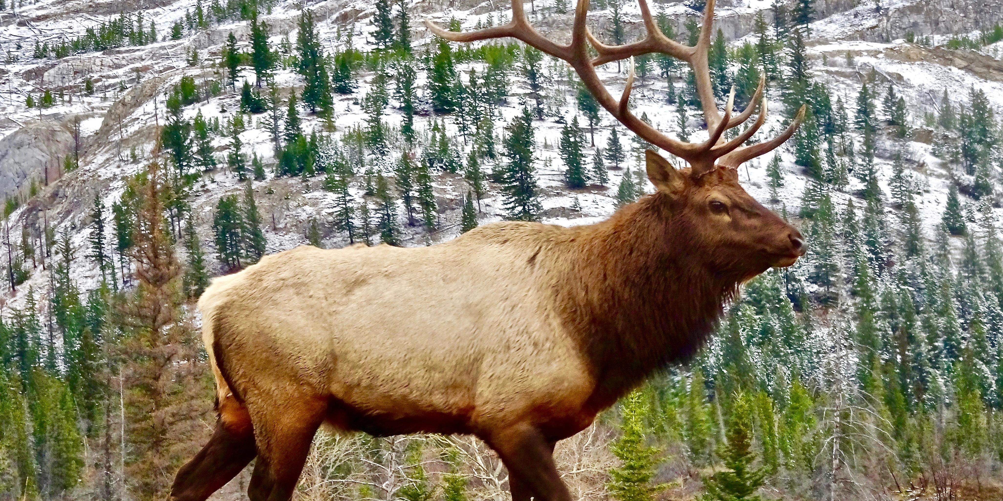 un-ciervo-herido-acometio-contra-cazador-que-lo-perseguia-y-puso-fin-su-vida