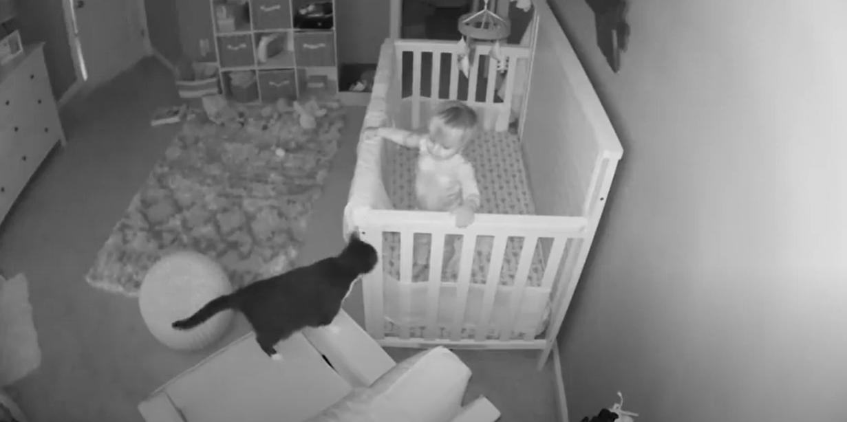 el-viral-atraparon-bebe-conversando-su-gato