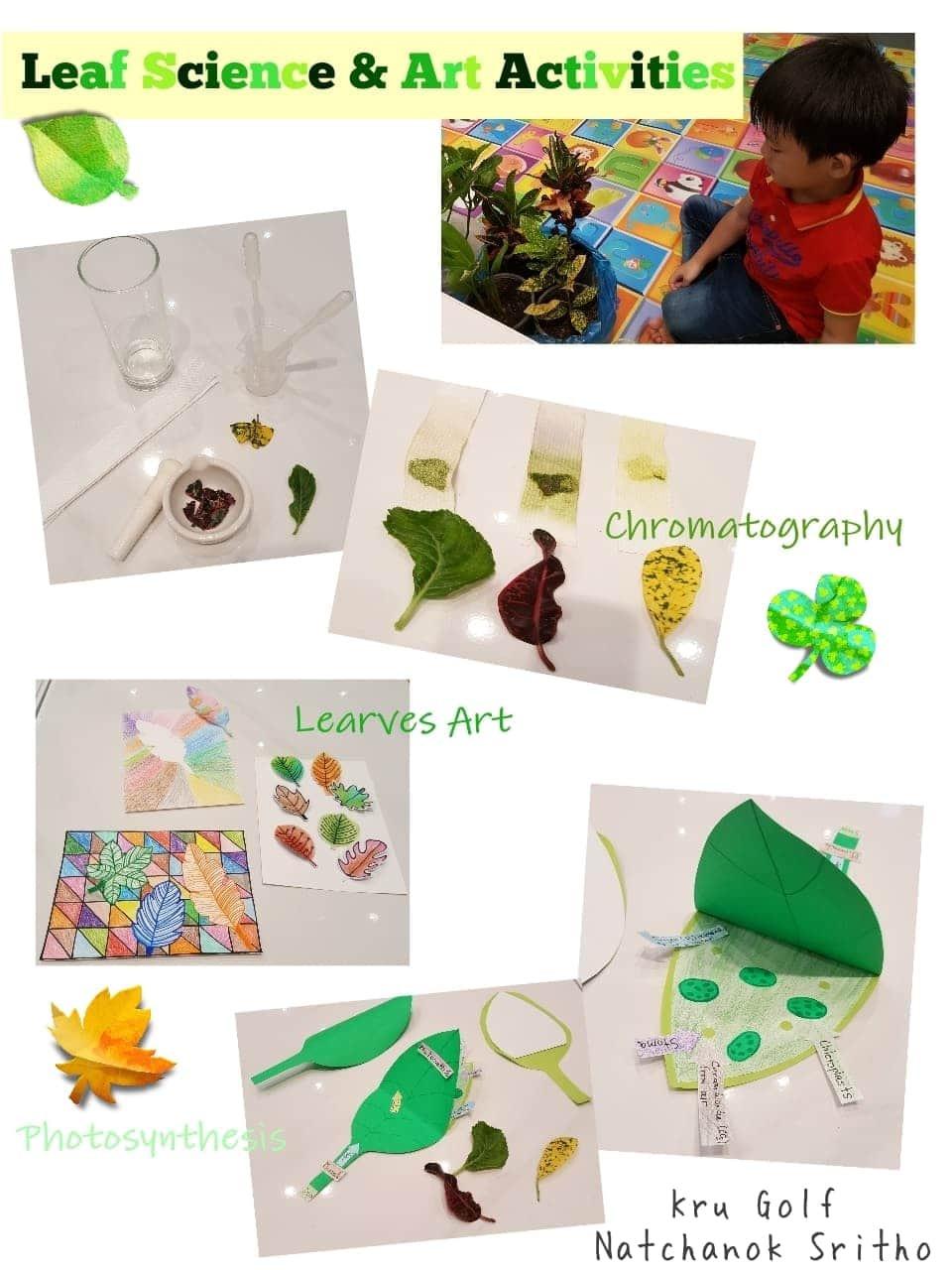 ภาพประกอบไอเดีย Leaf Sci x Art Activities