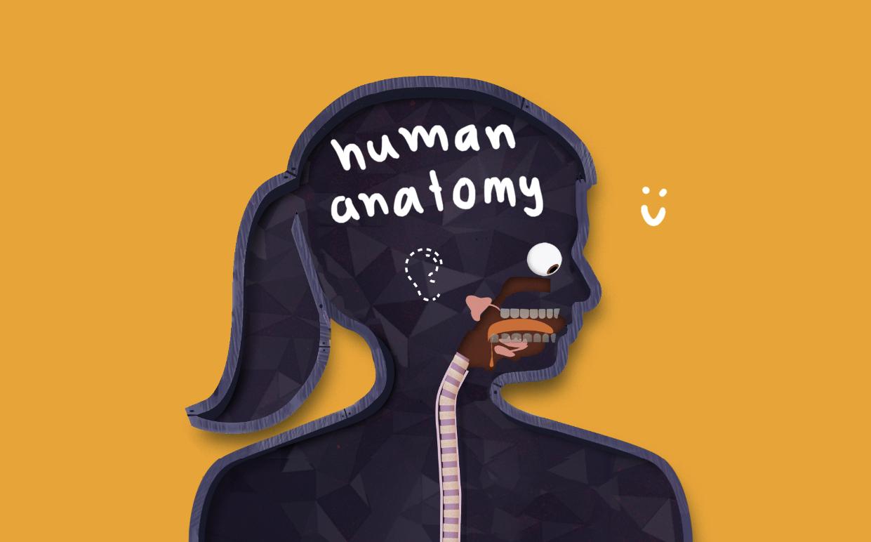 ภาพประกอบไอเดีย การสอน anatomy ผ่านแอปของ Tinybop