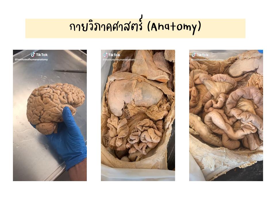 ภาพประกอบไอเดีย Tiktok กับการเรียนวิชาชีววิทยา