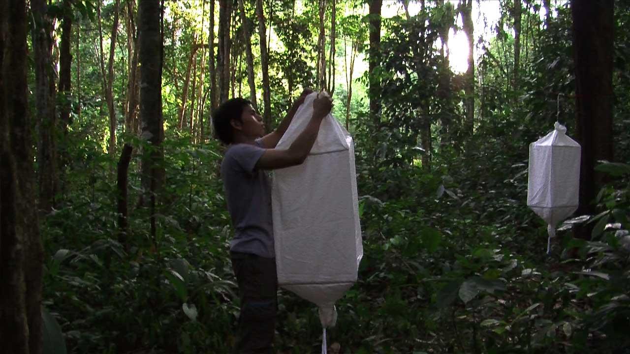 Biosemiotic Borneo