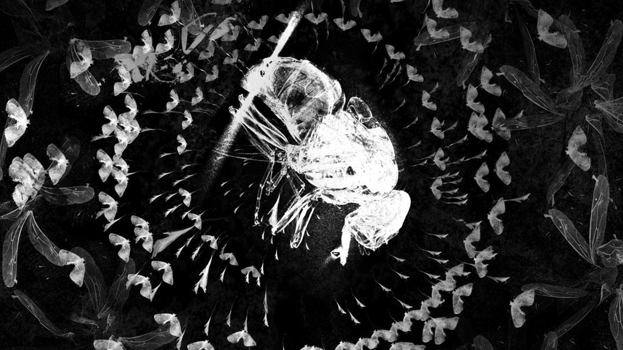 Erään hyönteisen tuho (The Death of an Insect)