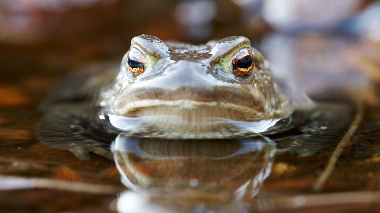 A Toad Story (Kunsten å leggje seg paddeflat)