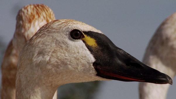Chasing Birds In Beringia