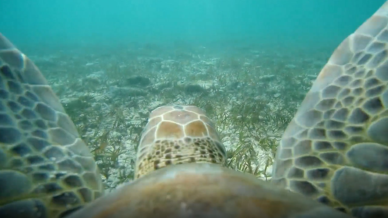 Through the Eyes of a Sea Turtle