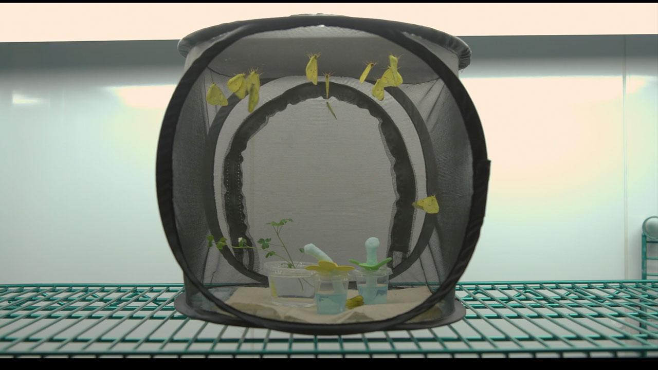 A Portable Butterfly Vivarium