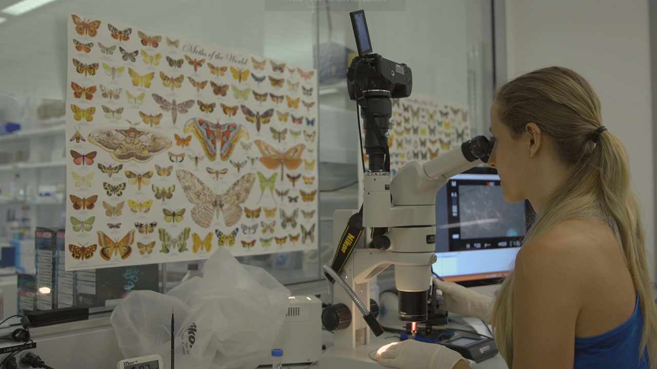 CRISPR Injection: First Steps to Modify Butterfly Wing Color and Shape