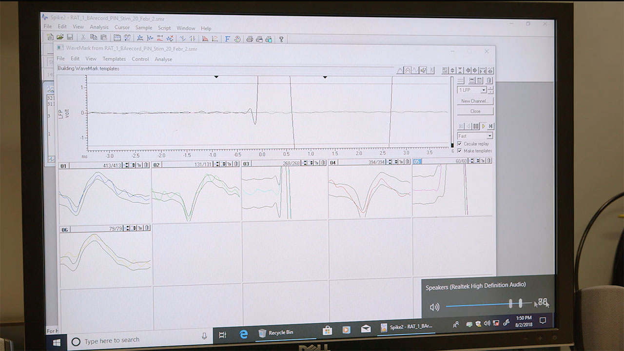 Acute Electrophysiology recording with CED interface