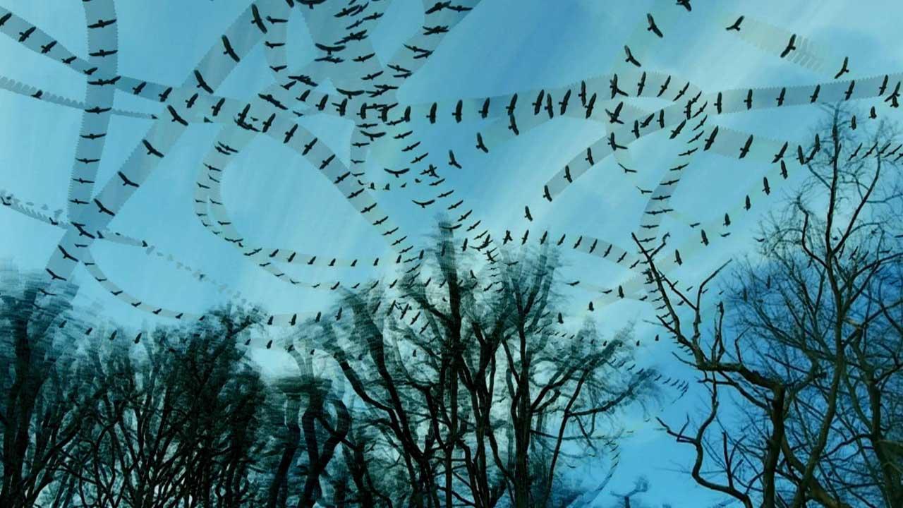 Tracing Animal Movement Patterns