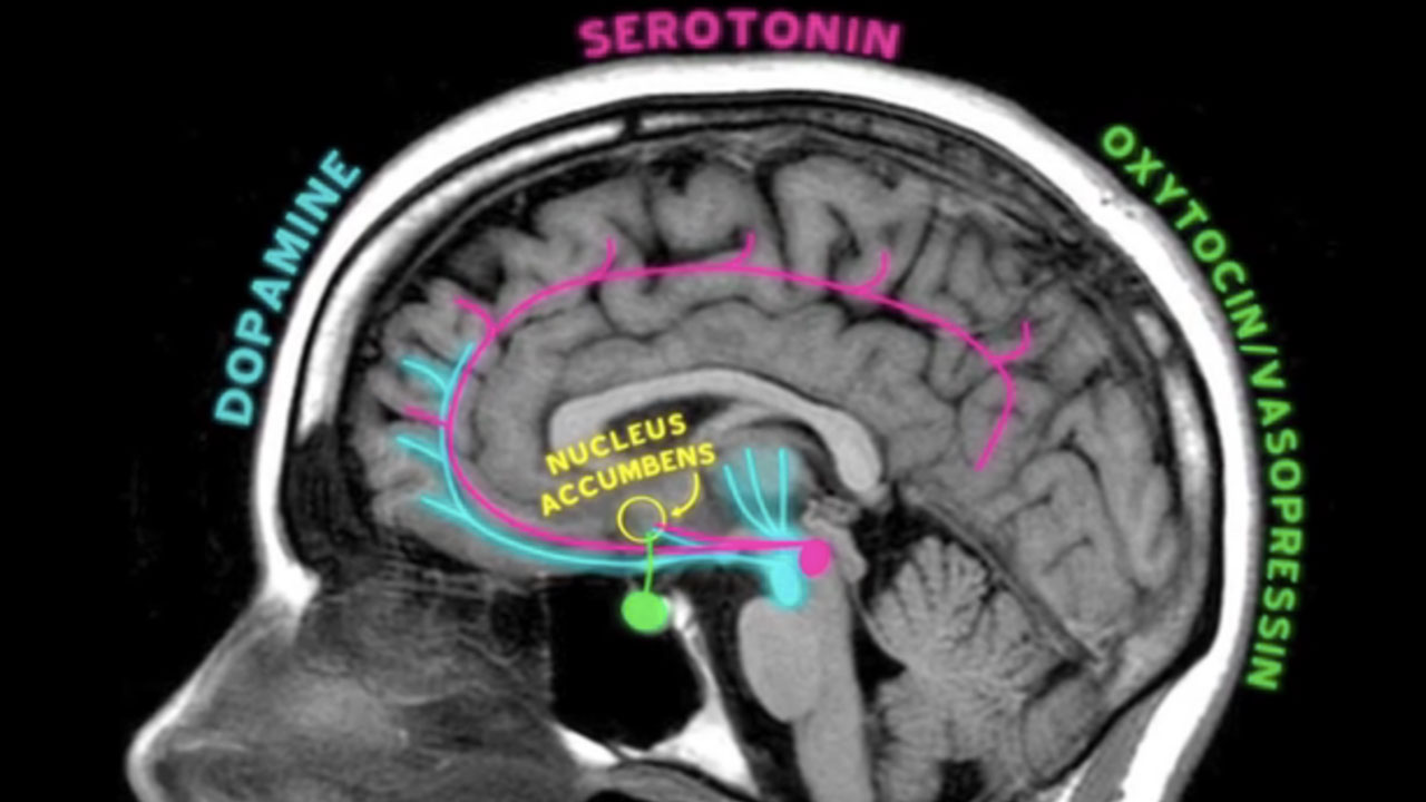 Your Brain on Emotion