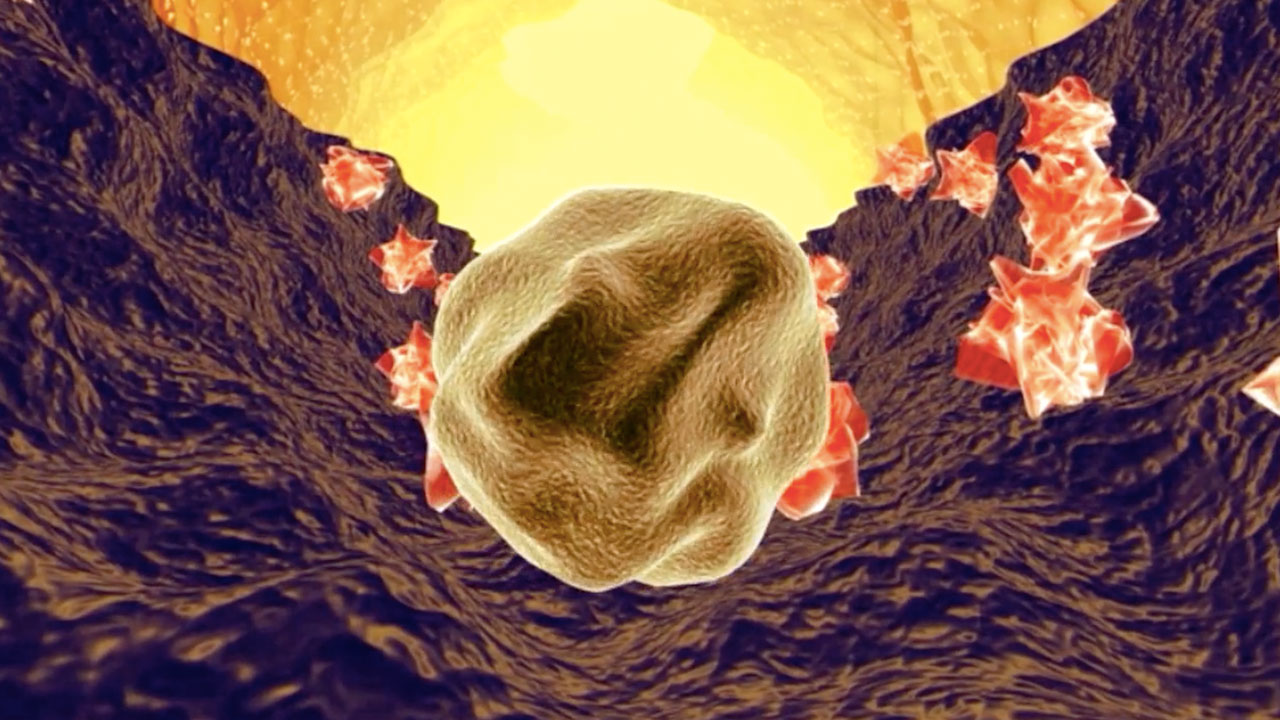 The Stem Cell: A New Protagonist Emerges