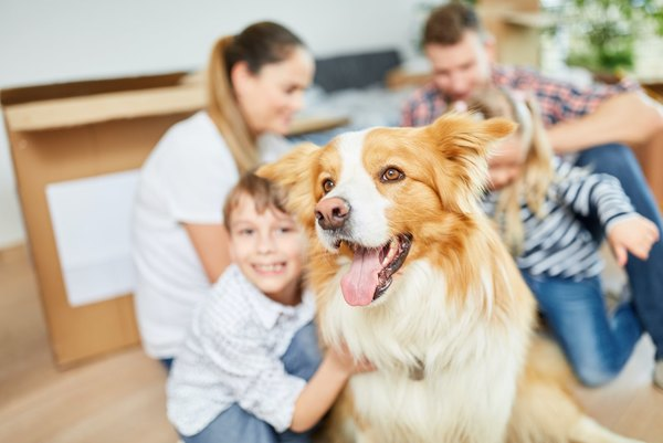 Can You Get Health Insurance For Your Pets?