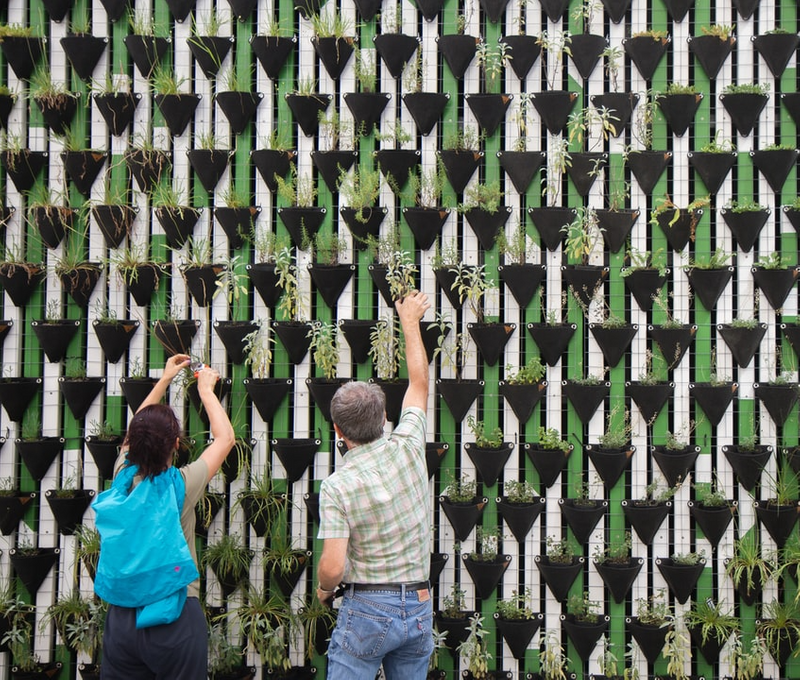Two people work together to plant a green wall