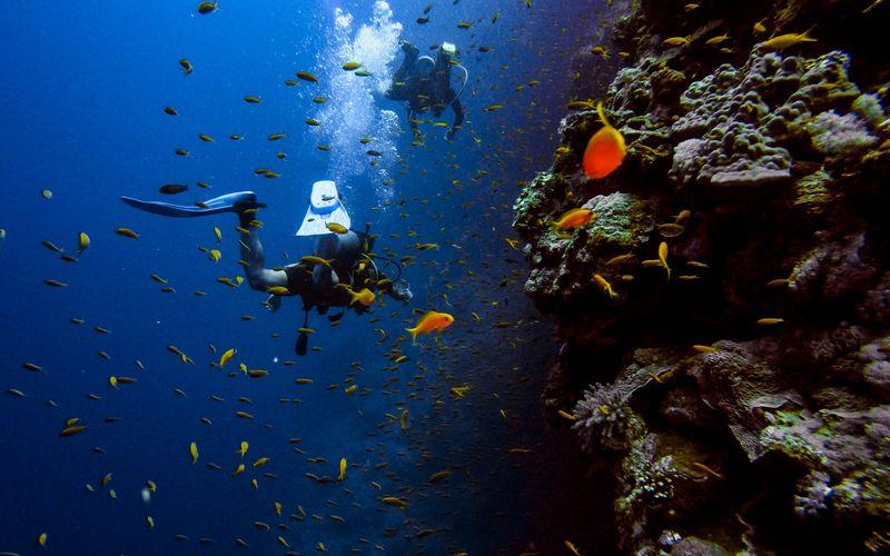 Two scuba divers near a reef