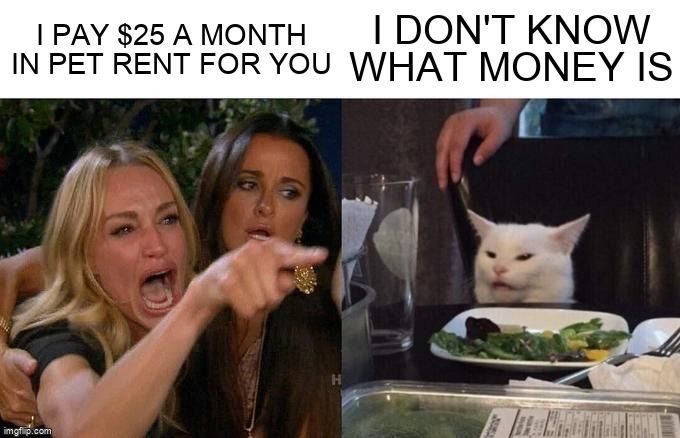 A woman yells at a confused cat about pet rent