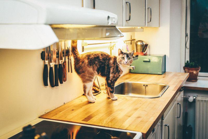 A cat walking beside a sink in a kitchen