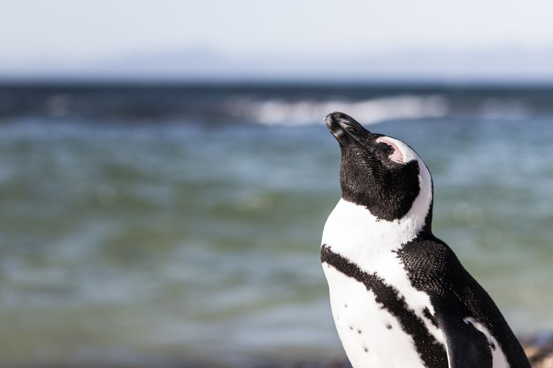 Penguin by the water