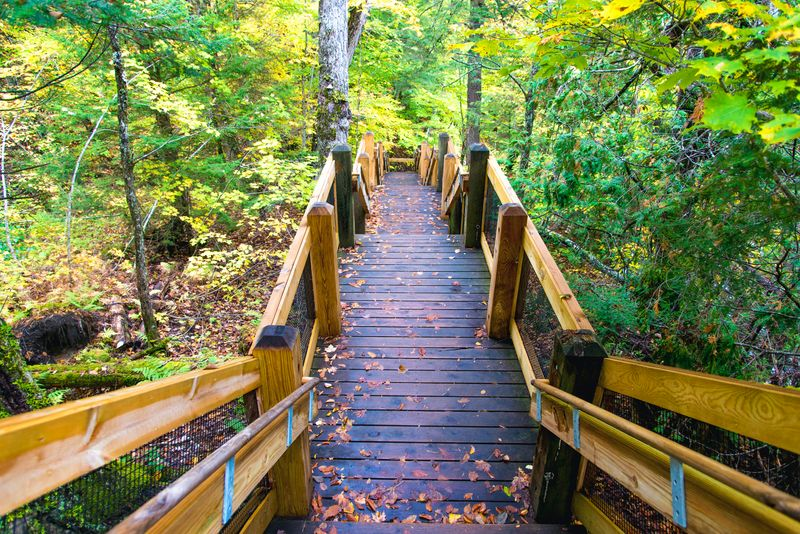 Wooden pathway leading into a beautiful green woodsy scene.