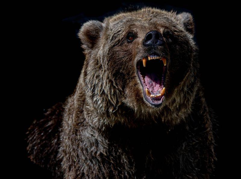 A bear bearing his teeth