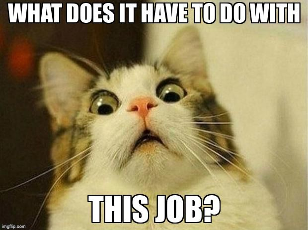 Scared Cat Text Says What does it have to do with this job?
