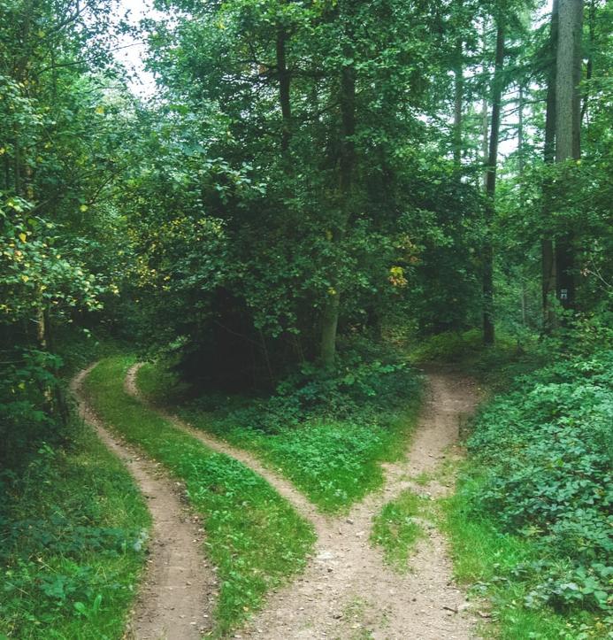 Two paths branching