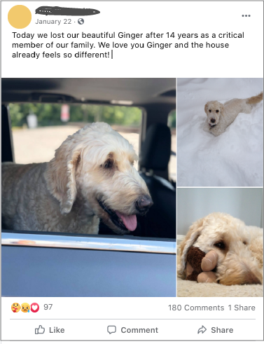 Facebook post announcing the loss of a beloved 14year old dog named Ginger along with 3 pictures of the dog.