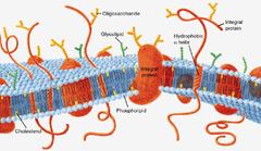 AP Biology - Cells
