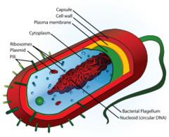 Biology vocabulary