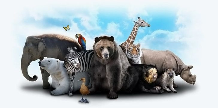 Animals_Most_living_animal_species