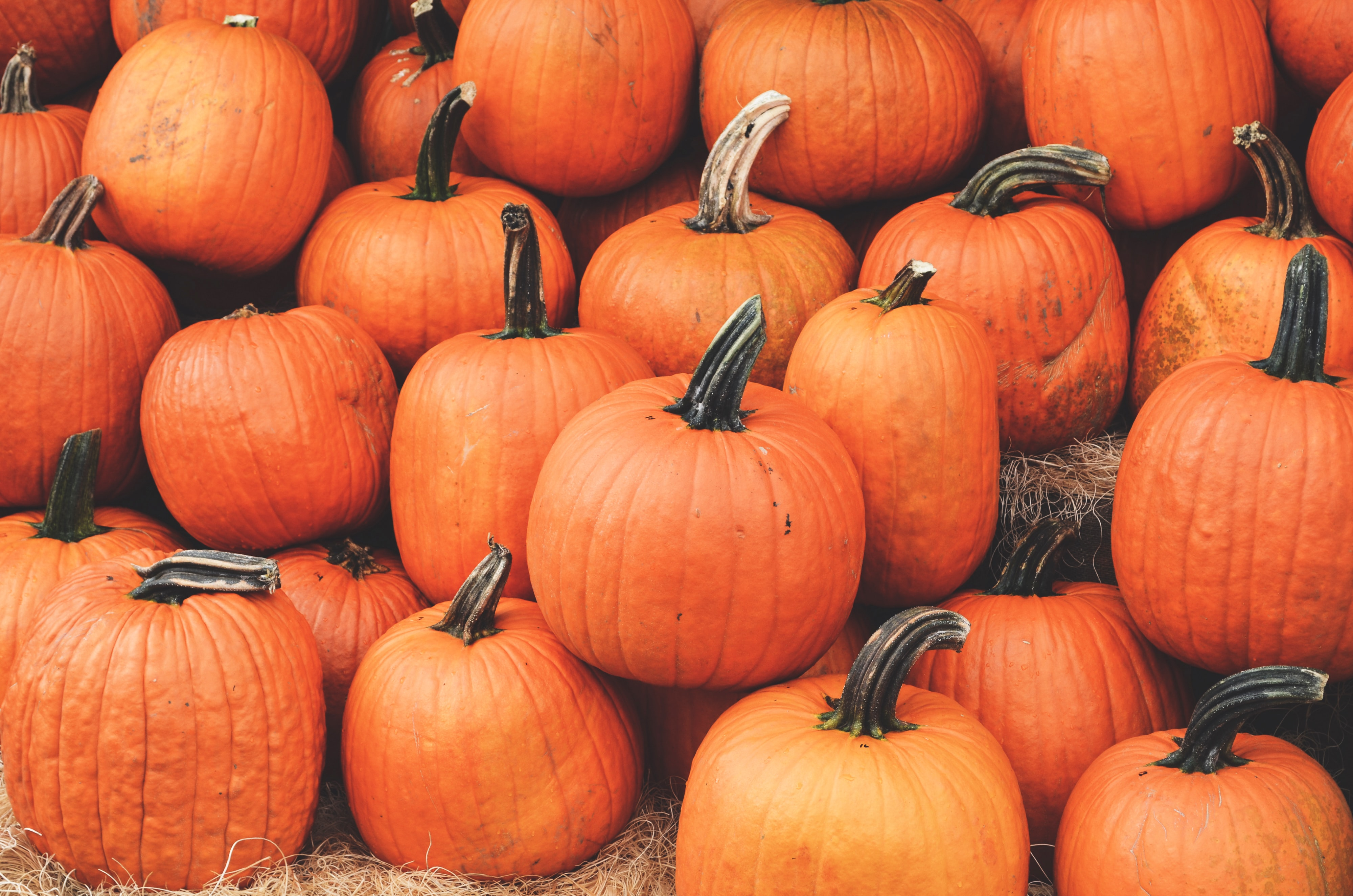 PYO Pumpkins at Primrose Vale