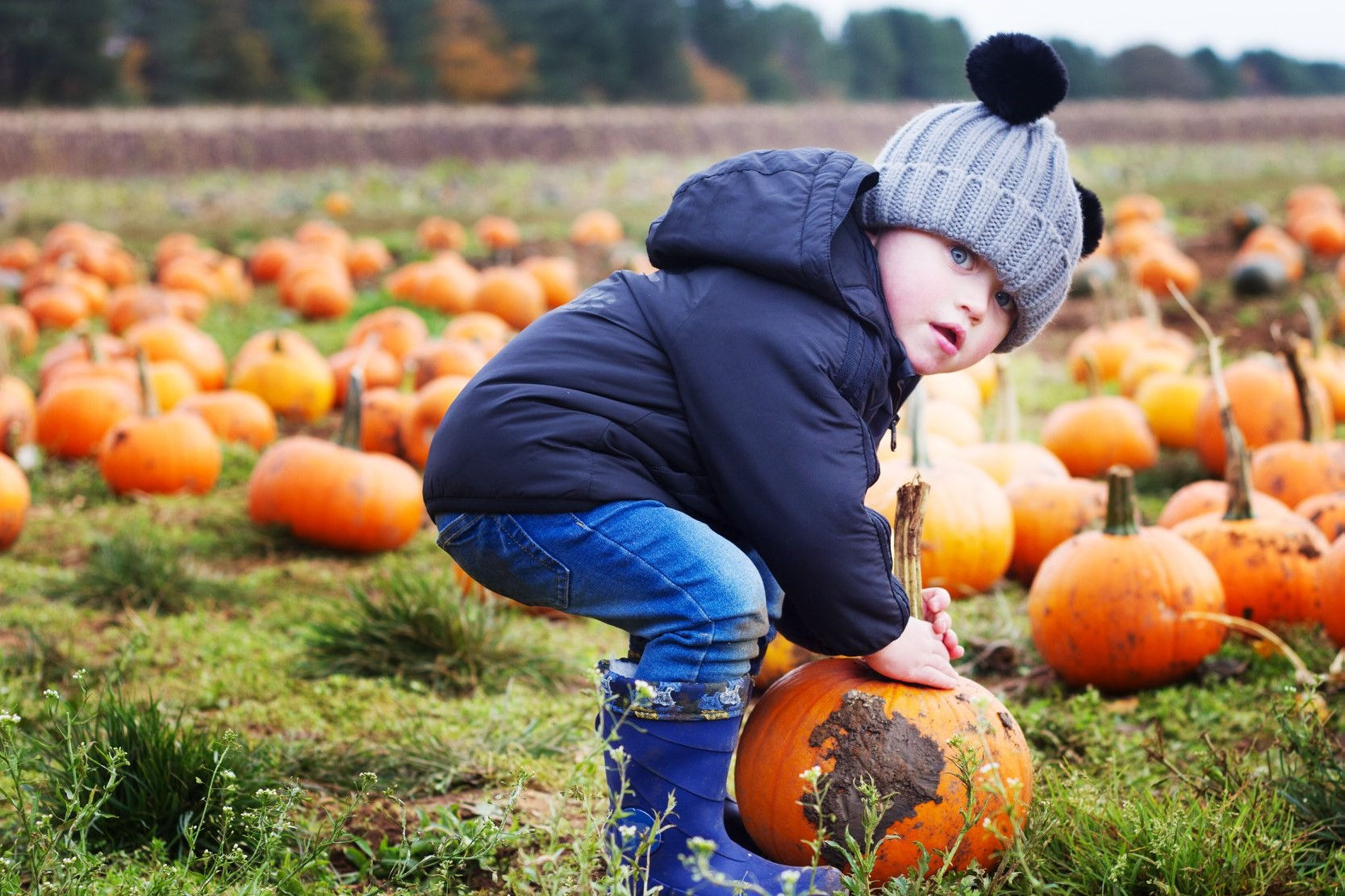 Pumpkin Picking at Cotswold Farm Park