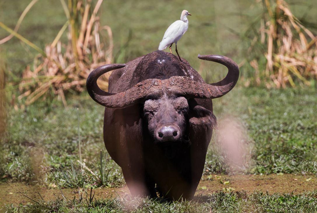 African Animal Lookout Webcam