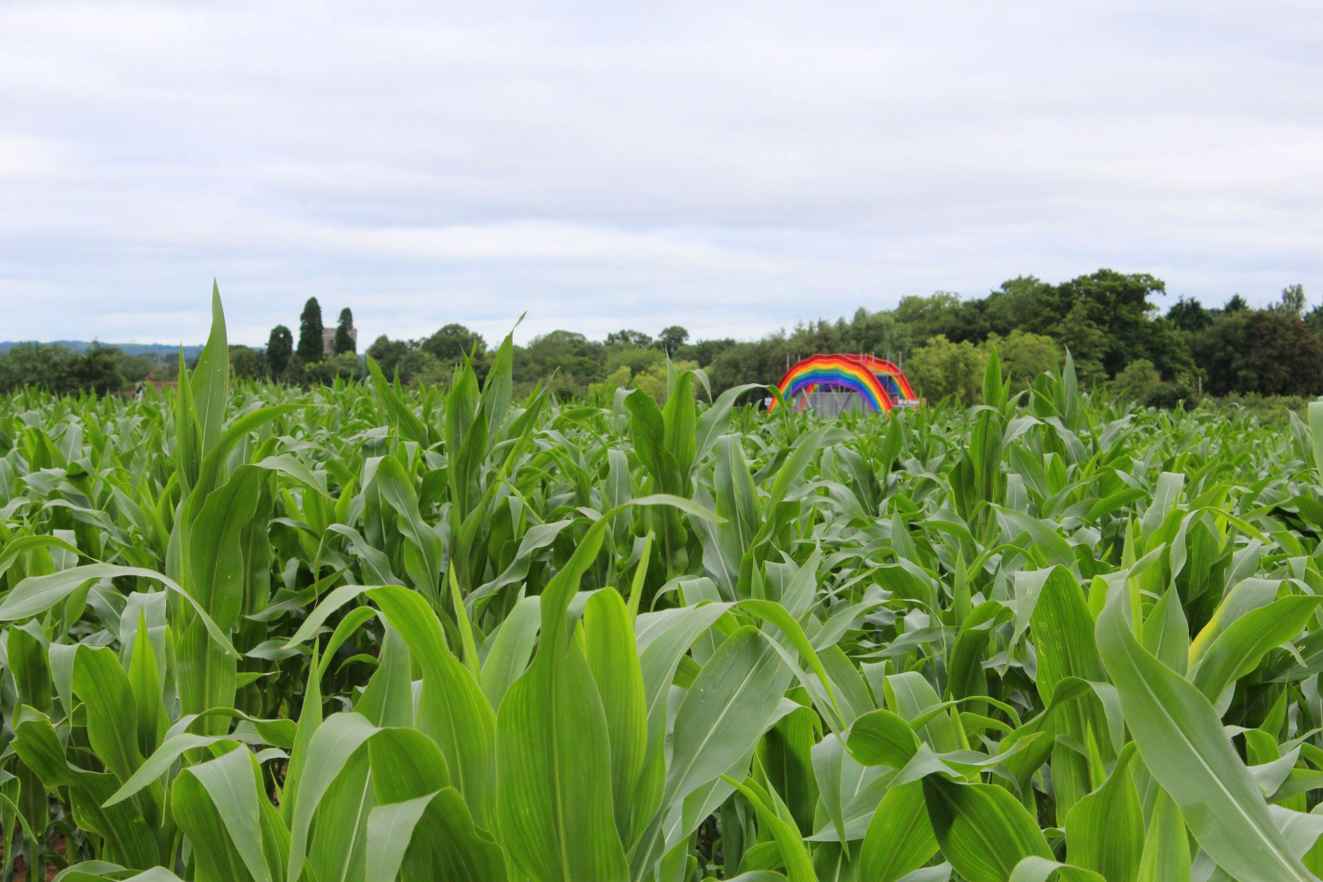 Rainbow Maize Trail