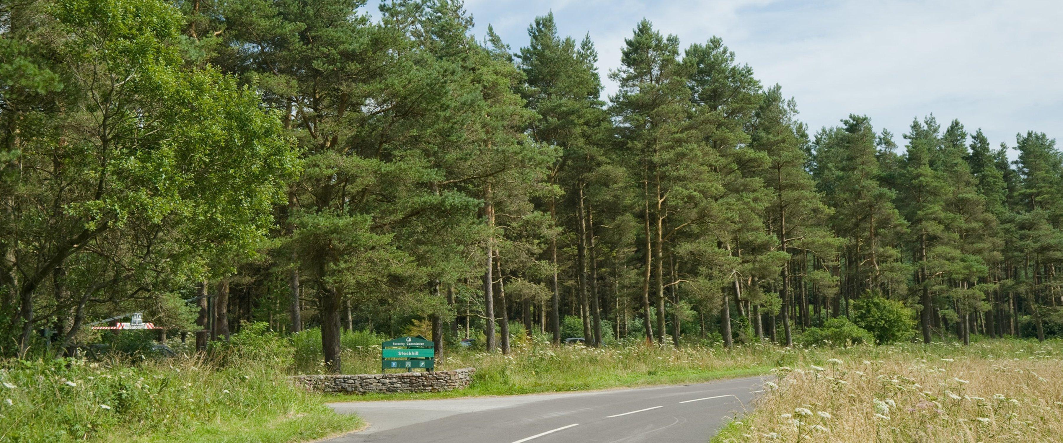 Stockhill Wood